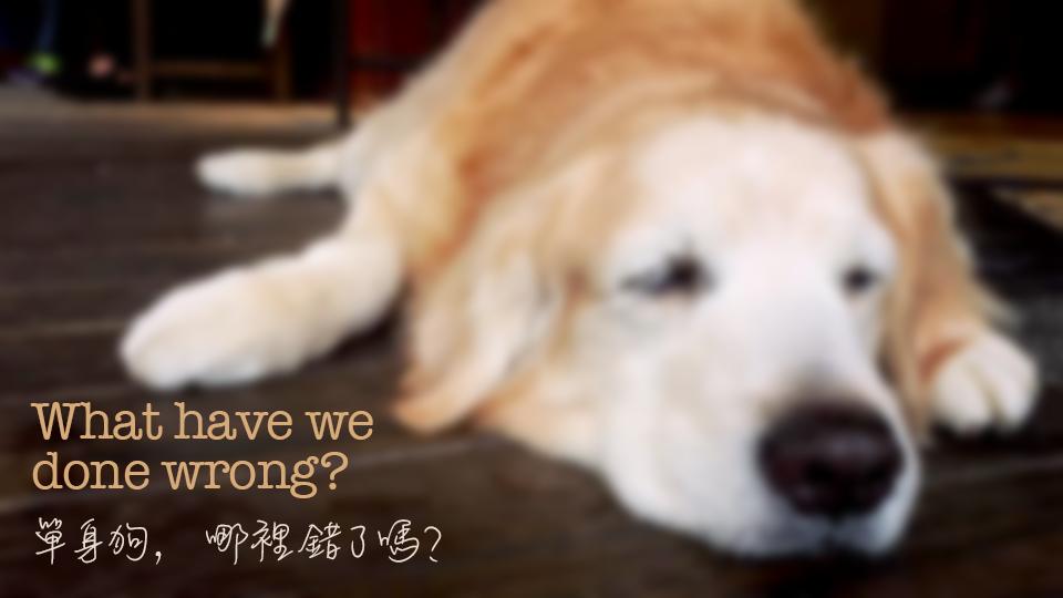 單身狗,哪裡做錯了嗎?